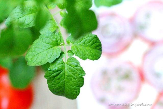 Tomato Plant Leaf